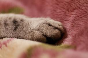 ネコの手の写真素材 [FYI00092280]