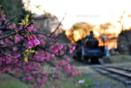 桜と蒸気機関車の素材 [FYI00092304]