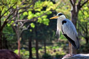 鳥の写真素材 [FYI00092312]