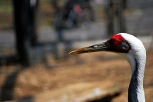 鳥の写真素材 [FYI00092324]