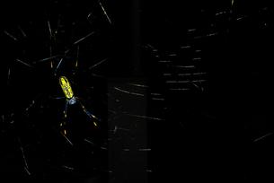 蜘蛛の写真素材 [FYI00092329]