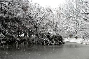 雪の日の池の写真素材 [FYI00092355]