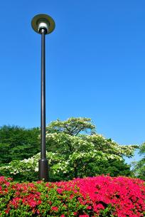 野川公園 街灯の写真素材 [FYI00092357]