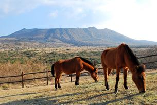馬と三原山の写真素材 [FYI00092369]