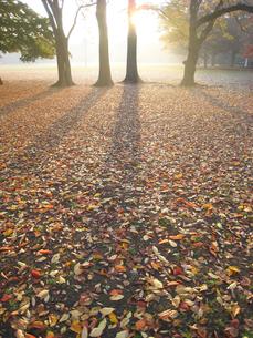 木の影の素材 [FYI00092658]
