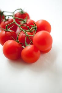 枝付きトマトの写真素材 [FYI00092684]