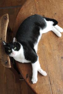 見上げる猫の写真素材 [FYI00092810]
