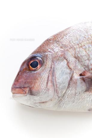 鯛の素材 [FYI00092876]