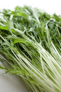 水菜の写真素材 [FYI00092965]