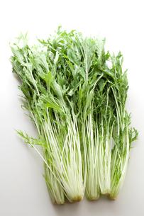 水菜の写真素材 [FYI00092982]
