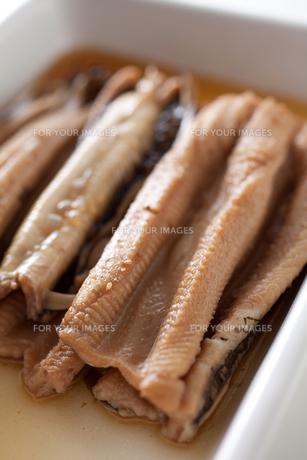 国産煮アナゴアップの素材 [FYI00093106]