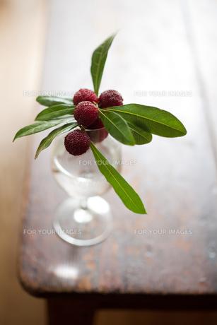 ワイングラスに生けたヤマモモの素材 [FYI00093145]