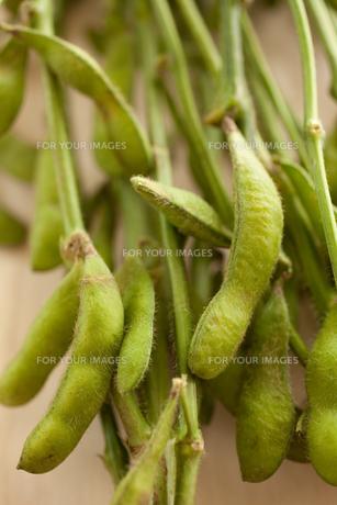 枝豆の素材 [FYI00093189]