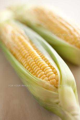 トウモロコシの写真素材 [FYI00093201]