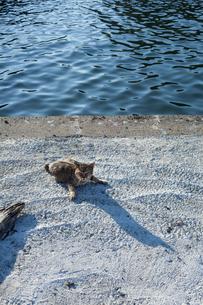 港の野良猫の素材 [FYI00093286]