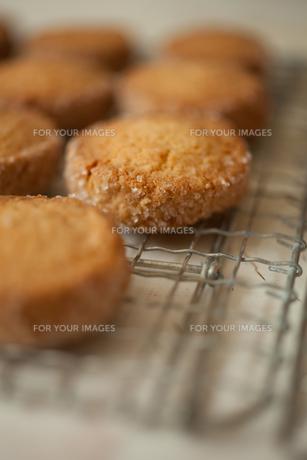 クッキーの素材 [FYI00093299]
