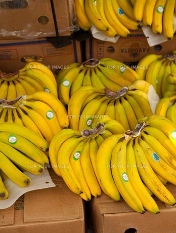 バナナの素材 [FYI00093344]