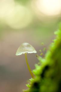 苔とキノコの写真素材 [FYI00093366]
