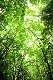 樹海の木漏れ日の写真素材 [FYI00093406]