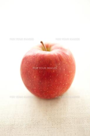 林檎の写真素材 [FYI00093409]
