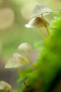 苔とキノコの写真素材 [FYI00093417]