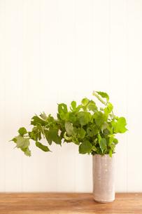 ワイルドな紫蘇の葉の素材 [FYI00093537]