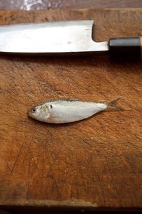 新子(コハダの幼魚)の写真素材 [FYI00093753]