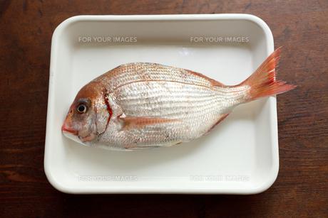 真鯛の素材 [FYI00093765]