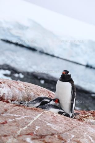 南極の風景の写真素材 [FYI00093951]