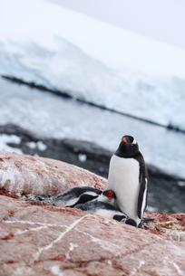 南極の風景の素材 [FYI00093951]