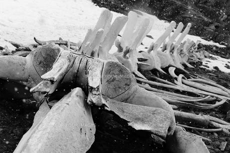 南極の風景の写真素材 [FYI00093962]