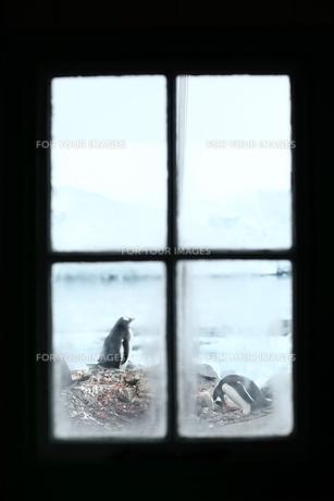 南極 基地 ペンギンの写真素材 [FYI00093970]