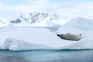 南極ツアーの素材 [FYI00093972]