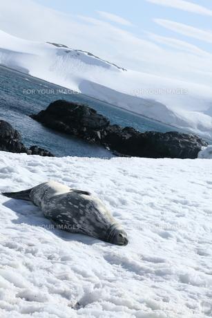 南極の風景の写真素材 [FYI00093981]