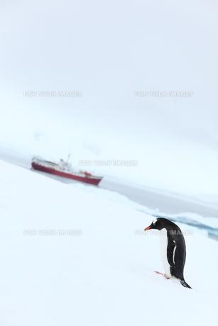 南極のペンギンの写真素材 [FYI00093991]