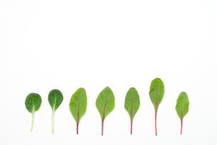 並んだサラダの葉の写真素材 [FYI00094150]