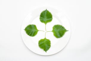 皿の上のシソの葉の写真素材 [FYI00094154]
