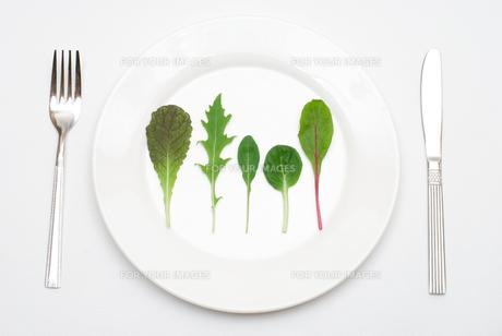 皿の上のサラダの葉の写真素材 [FYI00094155]
