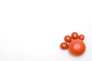 トマトの足の写真素材 [FYI00094166]