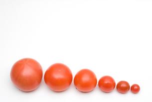 トマトの行列の写真素材 [FYI00094167]