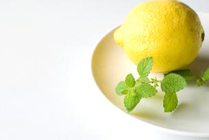 レモンバームとレモンの写真素材 [FYI00094510]