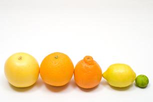 並んだ柑橘類の写真素材 [FYI00094550]