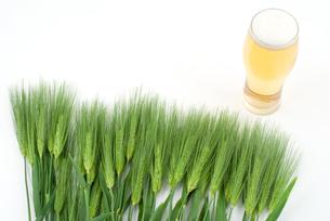 ビールと六条大麦の穂の写真素材 [FYI00095691]