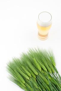 ビールと六条大麦の穂の写真素材 [FYI00095696]