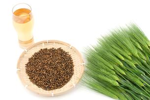 麦茶と麦の写真素材 [FYI00095702]