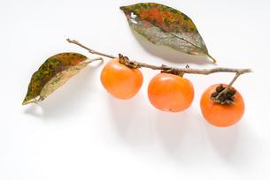 収穫した柿の実の写真素材 [FYI00096166]