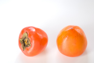 大きな渋柿の実の写真素材 [FYI00096178]