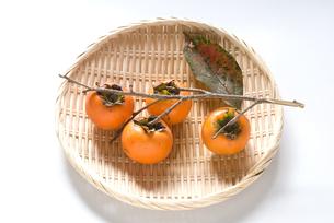収穫した柿の実の写真素材 [FYI00096179]