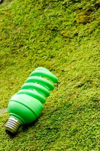 コケの上の緑の電球の写真素材 [FYI00096378]