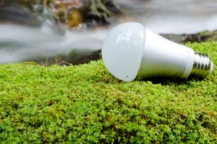 コケの上の緑の電球の写真素材 [FYI00096383]